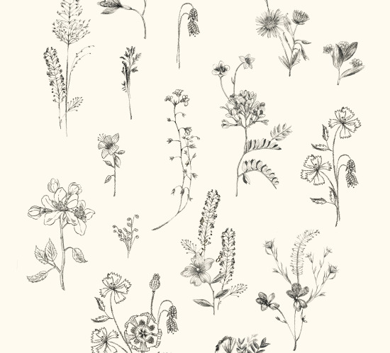 botanical_monoprints