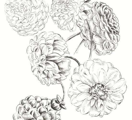 sketched_dhalia_floral